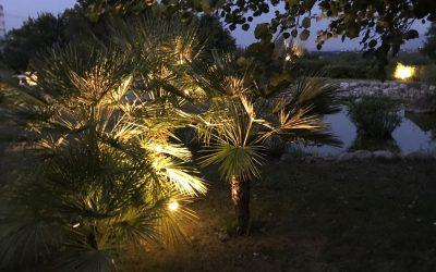 Esempi di Illuminazione Alberi da Giardino