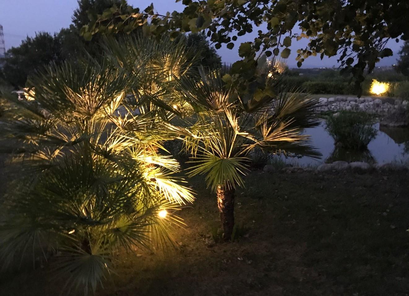 Grandi Alberi Da Giardini esempi di illuminazione alberi da giardino - media arc festival